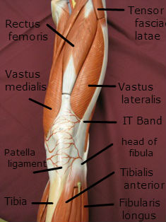 Iliotibial band it band attachment knee pain and tendinitis ccuart Gallery