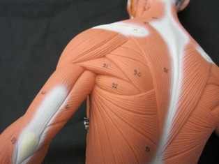 Dorsal Scapular Nerve Entrapment Treatment And Causes Of Pain