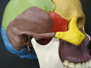 TMJ or Temporomandibular joint