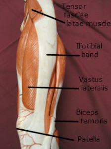 IT band Insertion - Iliotibial band